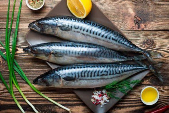 Fish - Mackerel (2)