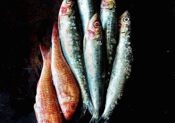 Fish - Sardine (1) Copy