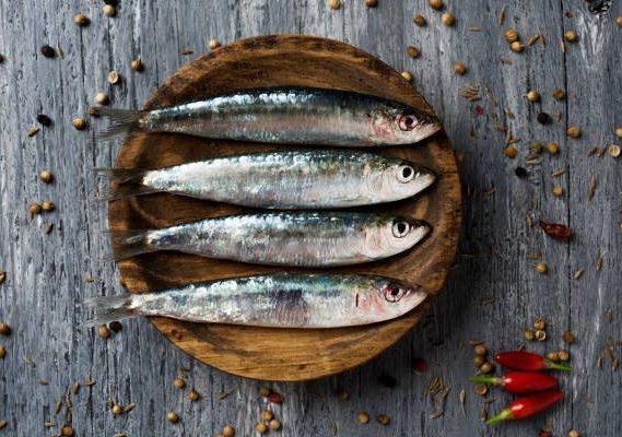 Fish - Sardine (2)